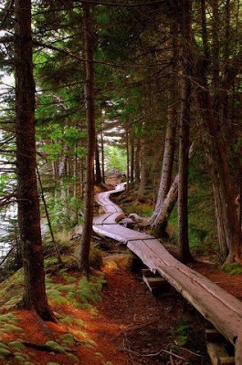 Oregon forest trail